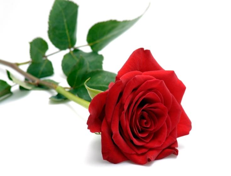 La Vie de Rose